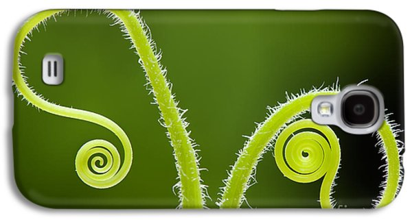 Tendrils Galaxy S4 Cases - Plant tendrils Galaxy S4 Case by Tim Gainey
