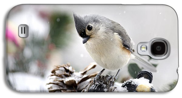 Playful Winter Titmouse Galaxy S4 Case by Christina Rollo