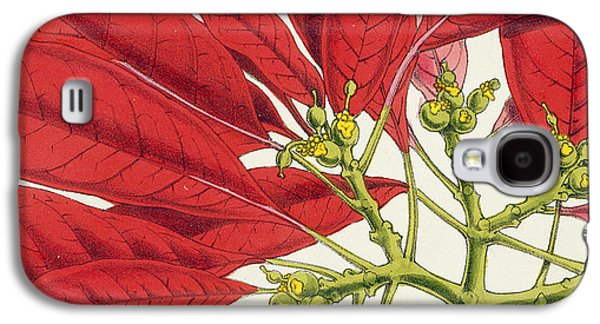 Flora Drawings Galaxy S4 Cases - Poinsettia Pulcherrima Galaxy S4 Case by WG Smith