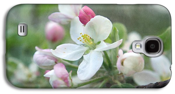 Apple Trees Galaxy S4 Cases - Pomme d Api 01 - s01bt01c Galaxy S4 Case by Variance Collections