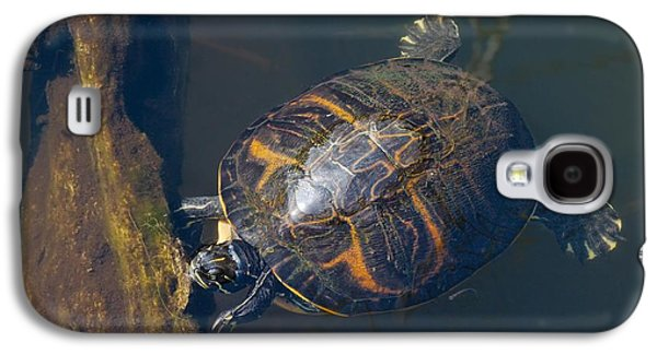 Slider Photographs Galaxy S4 Cases - Pond Slider Turtle Galaxy S4 Case by Rudy Umans