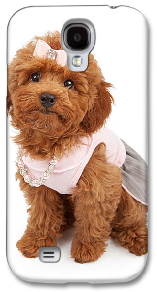 Groom Galaxy S4 Cases - Poodle Puppy Wearing Pink Outfit Galaxy S4 Case by Susan  Schmitz