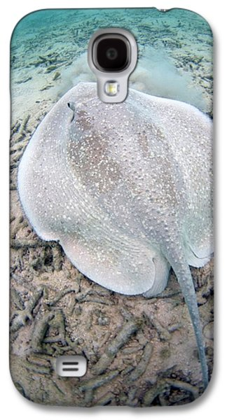 Porcupine Ray On Coral Rubble Galaxy S4 Case by Scubazoo