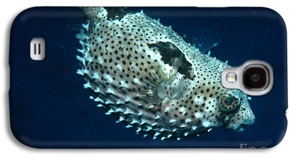Porcupine Fish Galaxy S4 Cases - Porcupinefish Deflating Galaxy S4 Case by Gregory G. Dimijian, M.D.
