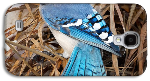 Portrait Of A Blue Jay Square Galaxy S4 Case by Bill Wakeley