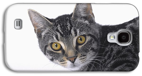 House Pet Galaxy S4 Cases - Portrait Of A Grey Tabby Catvancouver Galaxy S4 Case by Thomas Kitchin & Victoria Hurst