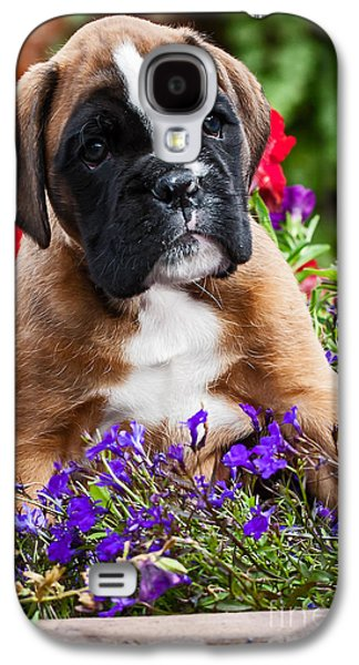 Boxer Galaxy S4 Cases - portrait of Boxer dog puppy Galaxy S4 Case by Doreen Zorn