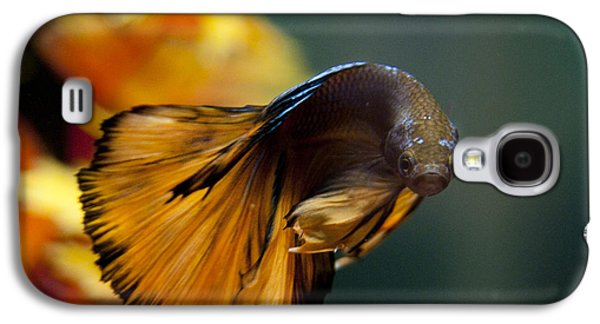 Betta Galaxy S4 Cases - Pose for the camera Galaxy S4 Case by Rachel Trudgian