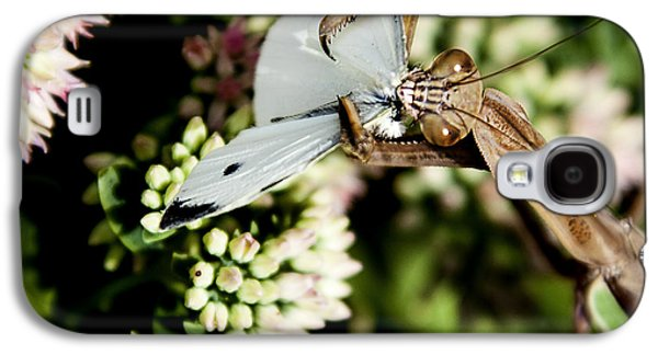 Butterfly Prey Galaxy S4 Cases - Preying Mantis 6 Galaxy S4 Case by Lance Theroux