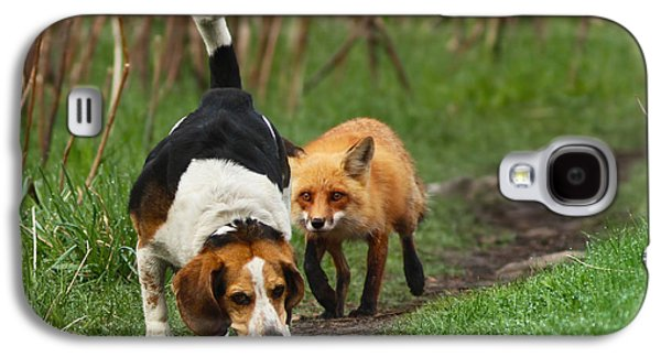 Animal Photographs Galaxy S4 Cases - Probably the Worlds Worst Hunting Dog Galaxy S4 Case by Mircea Costina Photography