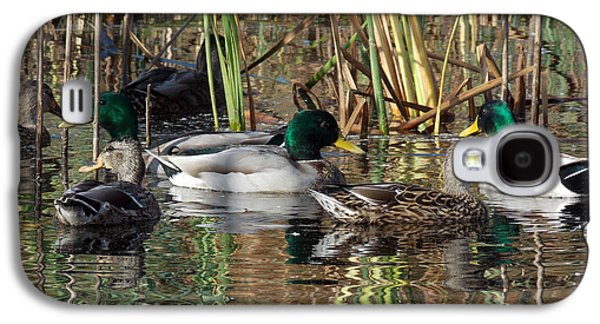 Photos Of Birds Galaxy S4 Cases - Puddle Ducks Galaxy S4 Case by Skip Willits