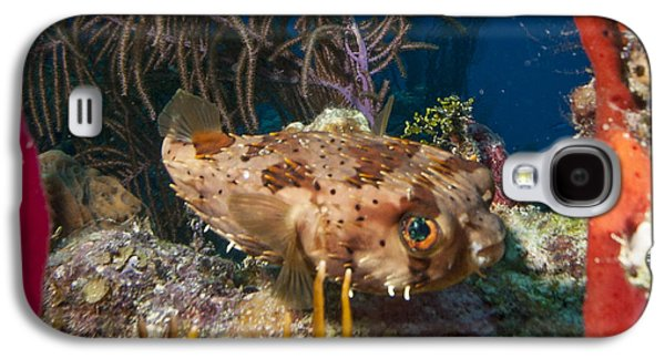 Porcupine Fish Galaxy S4 Cases - Puffer Retreat Galaxy S4 Case by Jean Noren