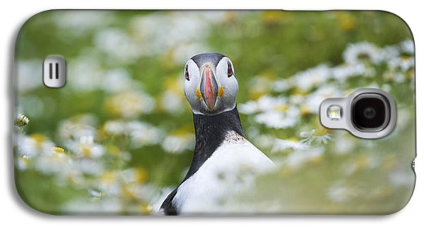 Seabirds Galaxy S4 Cases - Puffin Galaxy S4 Case by Tim Gainey