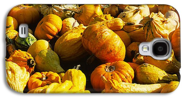 Half Moon Bay Galaxy S4 Cases - Pumpkins And Gourds In A Farm, Half Galaxy S4 Case by Panoramic Images