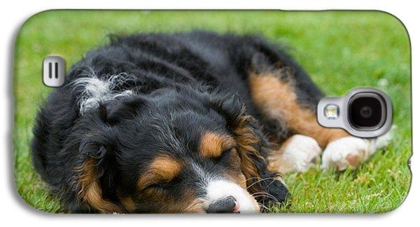 Pups Digital Art Galaxy S4 Cases - Puppy Asleep with Garden Daisy Galaxy S4 Case by Natalie Kinnear