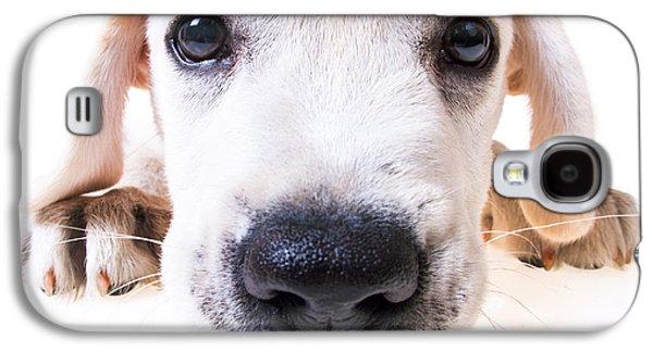 Puppies Galaxy S4 Cases - Puppy Face Galaxy S4 Case by Diane Diederich