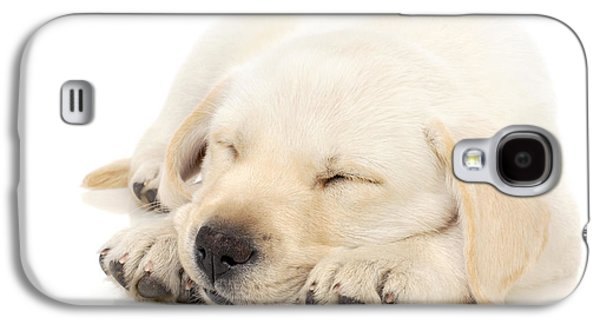 Domestic Galaxy S4 Cases - Puppy sleeping on paws Galaxy S4 Case by Johan Swanepoel