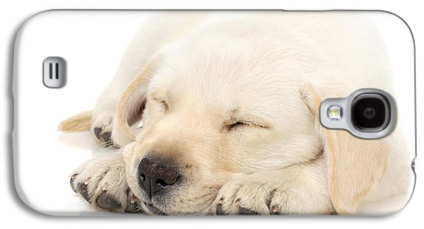 Innocence Galaxy S4 Cases - Puppy sleeping on paws Galaxy S4 Case by Johan Swanepoel