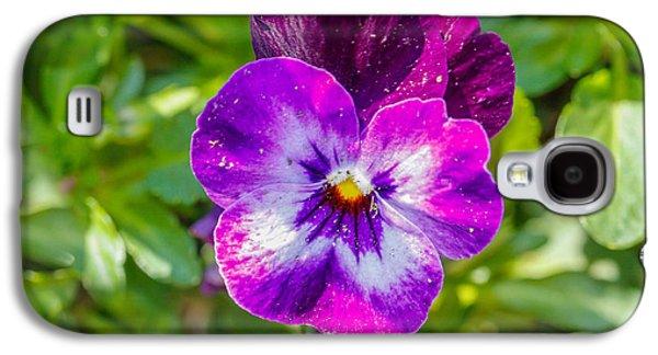 Cheekwood Galaxy S4 Cases - Purple is Here Galaxy S4 Case by Robert Hebert