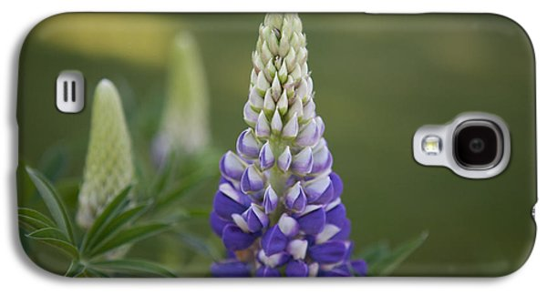 Alga Mixed Media Galaxy S4 Cases - Purple Lupine Galaxy S4 Case by Omaste Witkowski