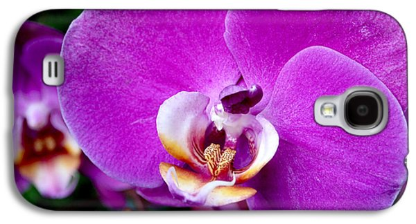 Purple Art Galaxy S4 Cases - Purple Orchid Galaxy S4 Case by Rona Black
