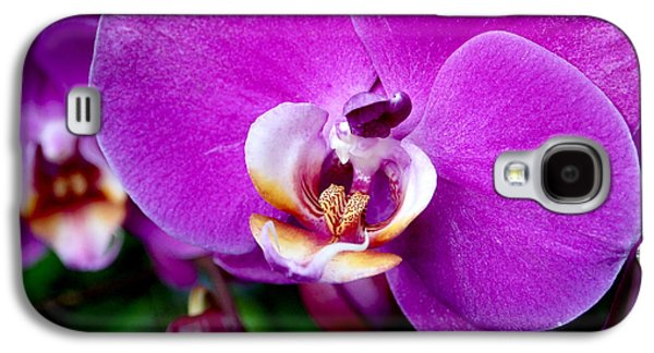 Purple Orchid Galaxy S4 Case by Rona Black