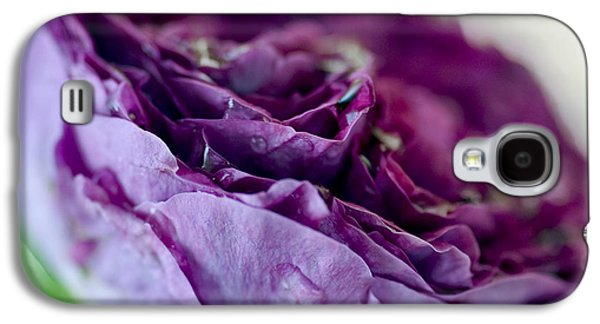 Garden Images Galaxy S4 Cases - Purple Rose Galaxy S4 Case by Frank Tschakert
