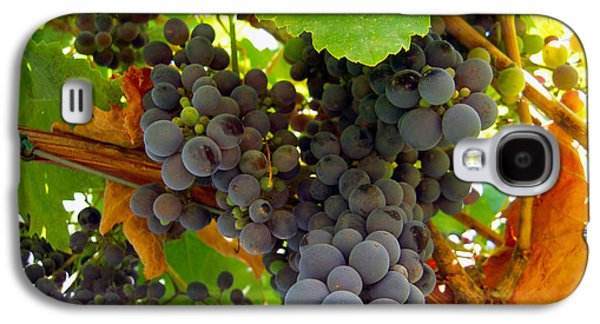 Malbec Galaxy S4 Cases - Pyrenees Winery Grapes Galaxy S4 Case by Michele  Avanti