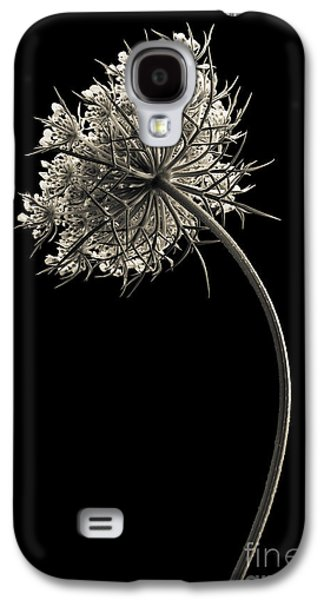 Melancholy Galaxy S4 Cases - Queen Annes Lace Galaxy S4 Case by Diane Diederich
