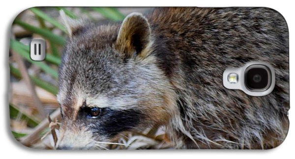 Raccoon Digital Art Galaxy S4 Cases - Raccoon Hunting for Food 1 Galaxy S4 Case by Sheri McLeroy