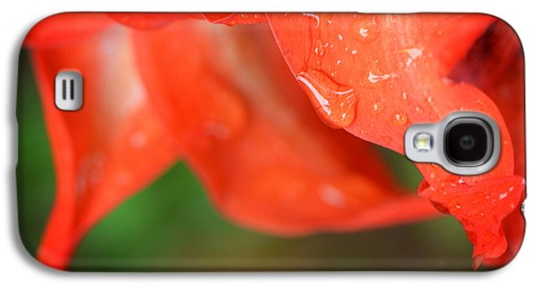 Gardening Photography Galaxy S4 Cases - Rain Dance - Red Flower Photography by Sharon Cummings Galaxy S4 Case by Sharon Cummings
