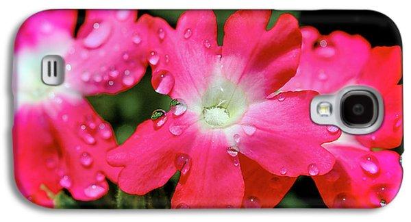 Macro Tapestries - Textiles Galaxy S4 Cases - Rain Flower Galaxy S4 Case by Dennis Bucklin