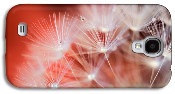 Raindrops On Dandelion Red Galaxy S4 Case by Marianna Mills