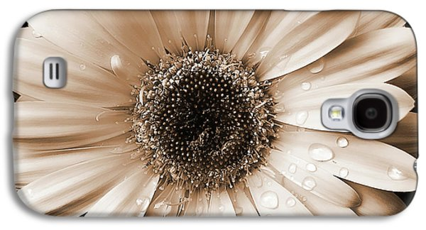 Close Galaxy S4 Cases - Rainsdrops on Gerber Daisy Sepia Galaxy S4 Case by Jennie Marie Schell