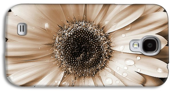 Blooms Galaxy S4 Cases - Rainsdrops on Gerber Daisy Sepia Galaxy S4 Case by Jennie Marie Schell