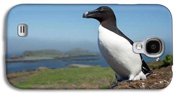 Razorbill On A Coastal Ledge Galaxy S4 Case by Simon Booth
