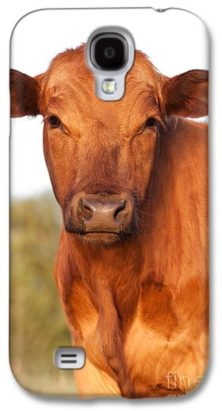 Red Angus Cow Galaxy S4 Case by Cindy Singleton