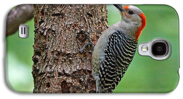Evansville Galaxy S4 Cases - Red Bellied Woodpecker Galaxy S4 Case by Sandy Keeton