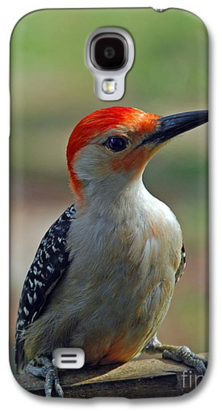Photos Of Birds Galaxy S4 Cases - Red Belly Galaxy S4 Case by Skip Willits