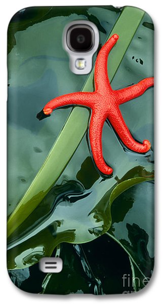 Harmonious Galaxy S4 Cases - Red Bloodstar Galaxy S4 Case by Inge Johnsson