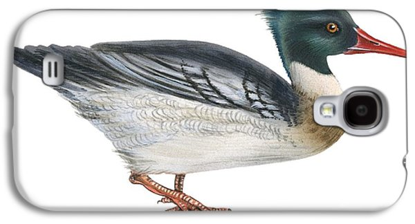Aquatic Drawings Galaxy S4 Cases - Red-breasted merganser Galaxy S4 Case by Anonymous