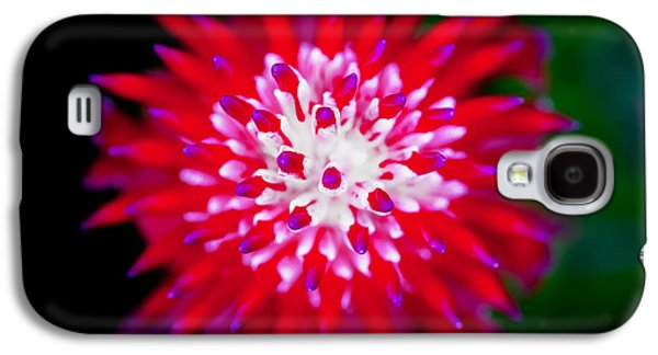 Epiphyte Galaxy S4 Cases - Red Bromeliad Painted Galaxy S4 Case by Rich Franco