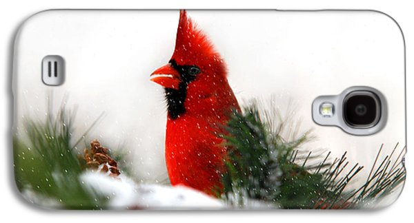 Red Cardinal Galaxy S4 Case by Christina Rollo