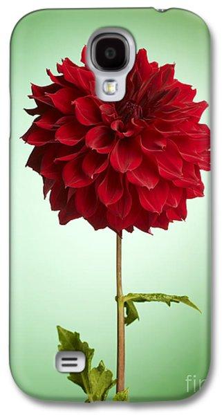 Business Galaxy S4 Cases - Red Dahlia Galaxy S4 Case by Tony Cordoza