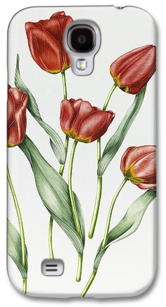 Botanical Galaxy S4 Cases - Red Darwin Tulips Galaxy S4 Case by Sally Crosthwaite