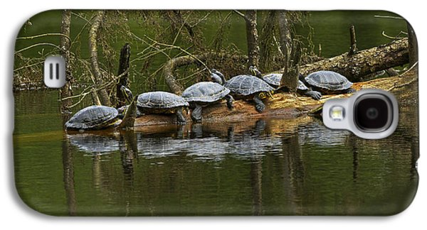 Slider Photographs Galaxy S4 Cases - Red-eared Slider Turtles Galaxy S4 Case by Sharon  Talson