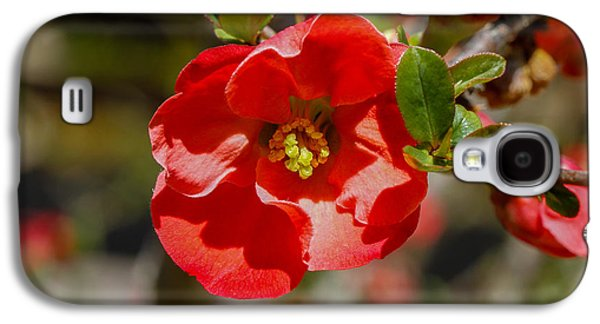 Cheekwood Galaxy S4 Cases - Red Flower Galaxy S4 Case by Robert Hebert
