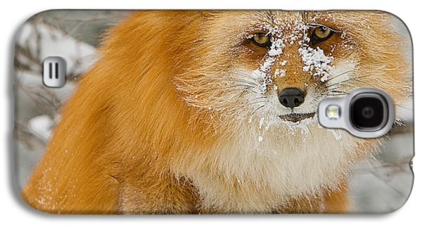 Canine Greeting Cards Digital Galaxy S4 Cases - Red Fox in Snow Galaxy S4 Case by Jerry Fornarotto