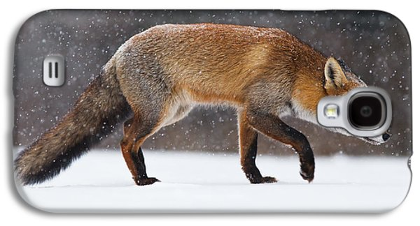 Red Fox Galaxy S4 Cases - Red fox trotting through a snowshower Galaxy S4 Case by Roeselien Raimond