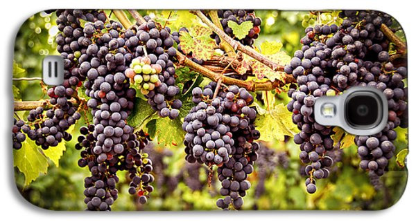 Red Grapes In Vineyard Galaxy S4 Case by Elena Elisseeva